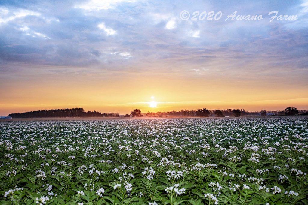 「朝日に照らされて」2020年第34回北の農村フォトコンテスト「金賞」